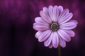 Flower Seeds Appeal 2021